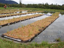 Wastewater westland district council for Design of oxidation pond
